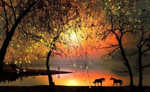 Horses-beautiful-nature-21888620-1172-722